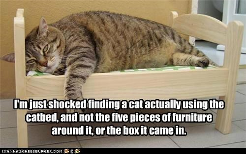 I'm just shocked finding a cat actually using the catbed, and not the five pieces of furniture around it, or the box it came in.