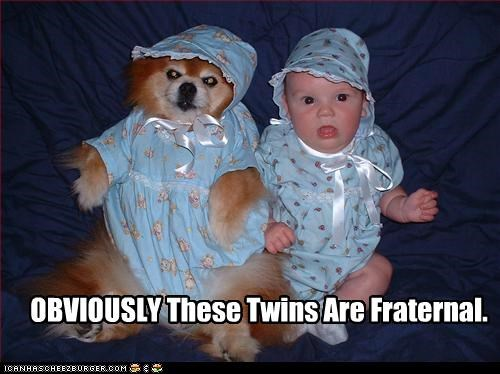 adorbz,baby,bonnet,child,fraternal twins,pomeranian,twins