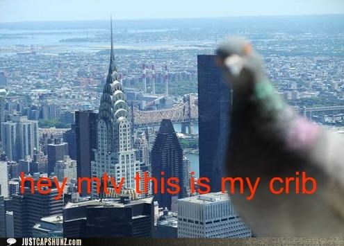 animals birds cities cribs I Can Has Cheezburger mtv new york pigeons TV - 5210403584