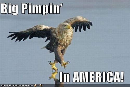 Big Pimpin' In AMERICA!