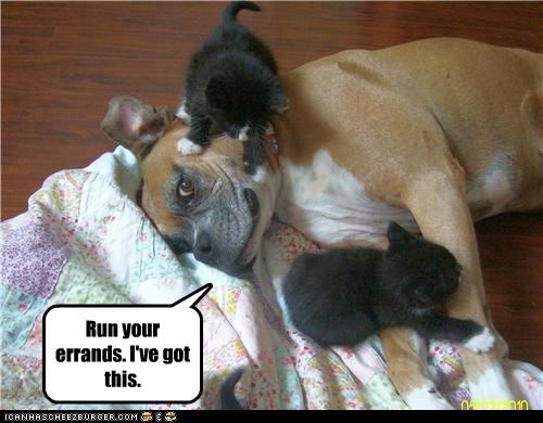 babysitter best of the week boxer care caring cat Cats friends Hall of Fame kitten - 5210632704