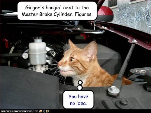 Ginger's hangin' next to the Master Brake Cylinder. Figures. You have no idea.