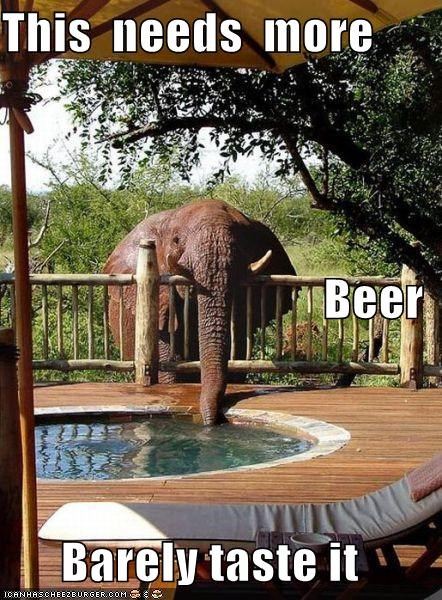 alcohol,beer,drinking,drinks,elephant,more beer,pool,swimming pool