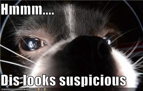 curious i dont believe you suspicious whatbreed - 5211010560