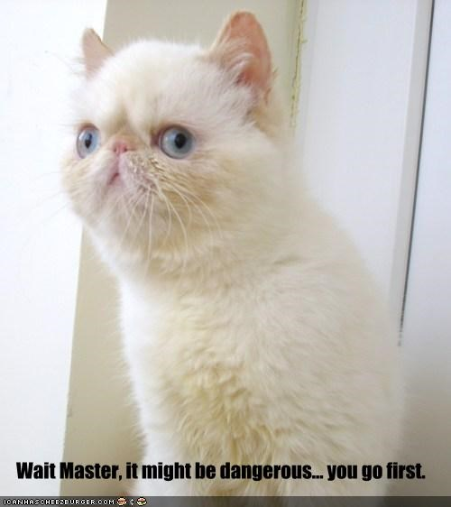 animals Cats cross eyed I Can Has Cheezburger quotes retarded - 5211132928