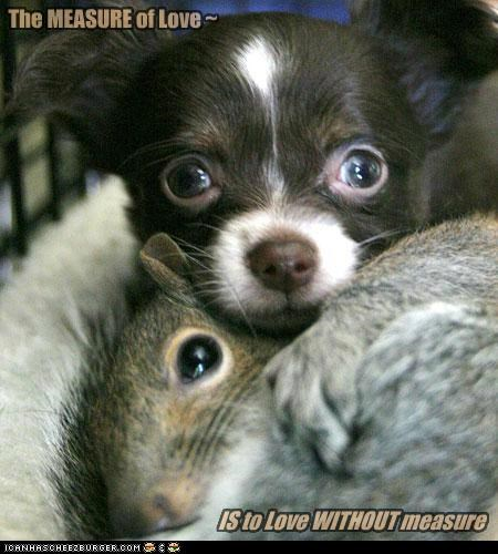 adorbs awww best of the week chihuahua friends friendship Hall of Fame love squirrel - 5211273984