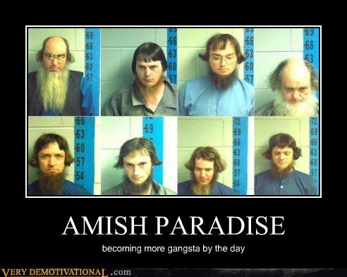 AMISH PARADISE becoming more gangsta by the day