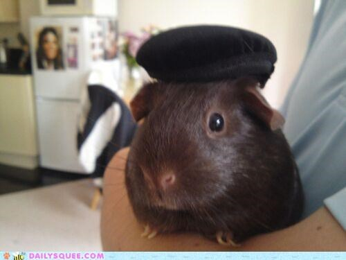 adorable beret dressed up french guinea pig Hall of Fame hat parisian reader squee - 5211497216