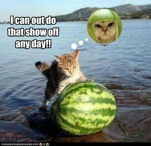 caption captioned cat Challenge Accepted limecat pushing watermelon - 5211677184