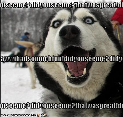 adventure,best of the week,exciting,fun,great,Hall of Fame,happy,happy dog,husky,lets-do-it-again,smiling