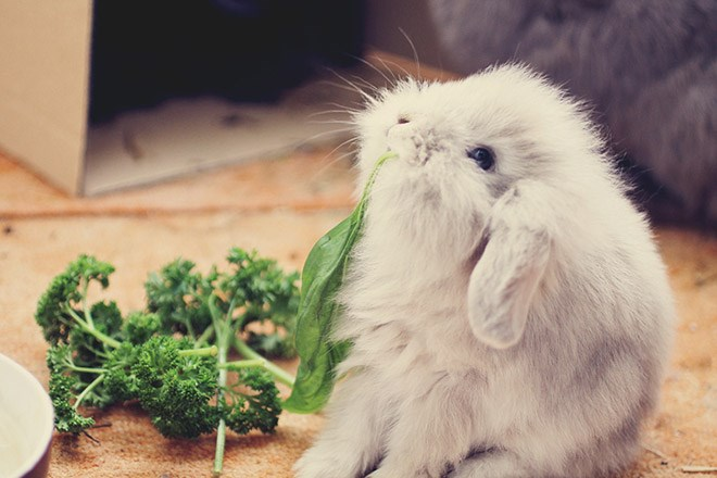 bunnies eating so much food and it's very cute