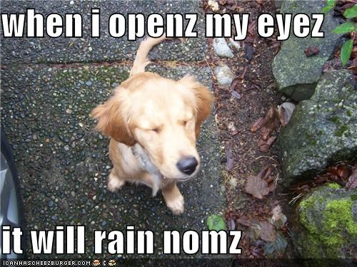 when i openz my eyez it will rain nomz