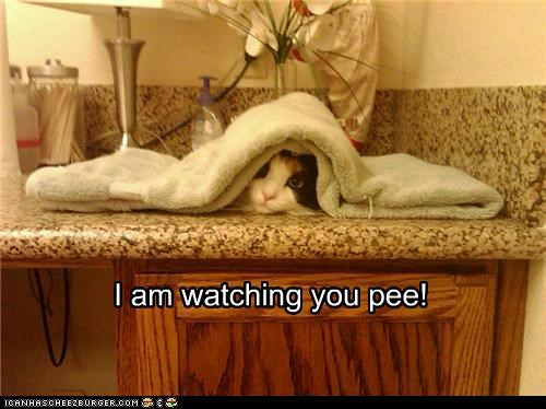 I am watching you pee!