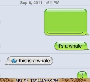 dumb text message whale - 5213168640