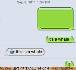 dumb text message whale - 5213168640