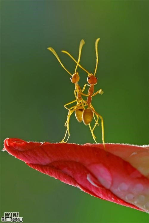 ants close up dance insect mother nature ftw nature photography - 5213749760