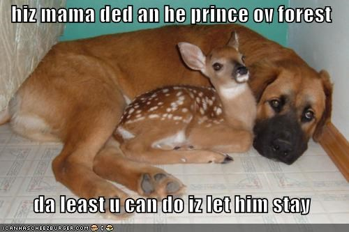 bambi,best of the week,deer,fawn,friends,friendship,Hall of Fame,love,mixed breed,whatbreed