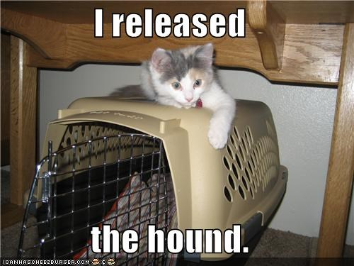 cage,caption,captioned,cat,hound,I,kennel,kitten,oops,released