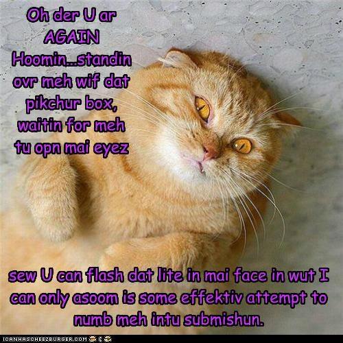 Cheezburger Image 5214855680