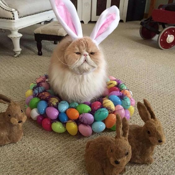 easter cute Cats funny - 5214981