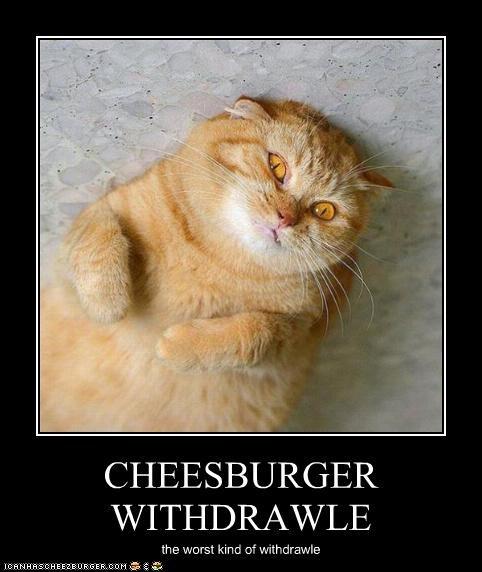 Cheezburger Image 5215421184