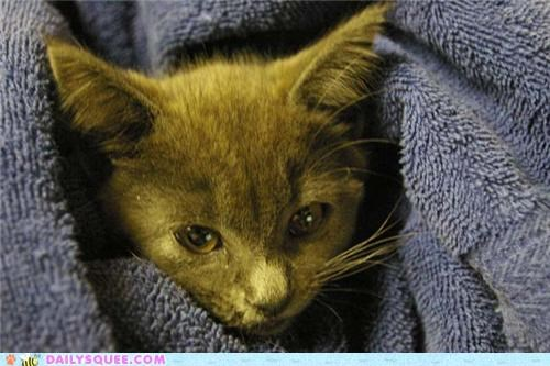 adult after before cat growing up kitten now reader squees then - 5215524864