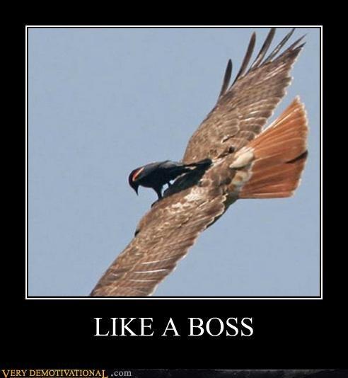 bird on bird Like a Boss Pure Awesome - 5215535616