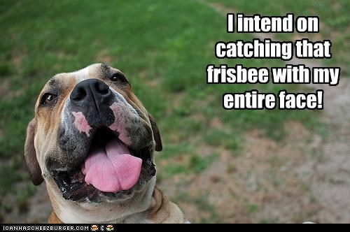 animals catching dogs dumb excited face frisbee i has a hotdog - 5216169216