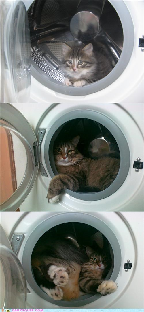 baby,cat,favorite,grown up,hideout,hiding,kitten,nostalgia,now,reader squees,spot,then,washing machine
