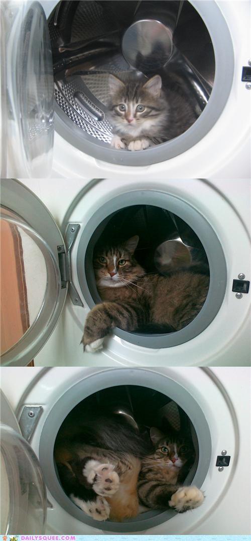 baby cat favorite grown up hiding kitten nostalgia now reader squees spot then - 5216550656