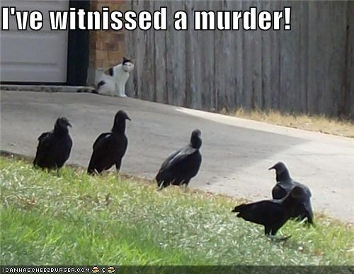 a murder of crows,cat,crows,I Can Has Cheezburger,murder,the horror