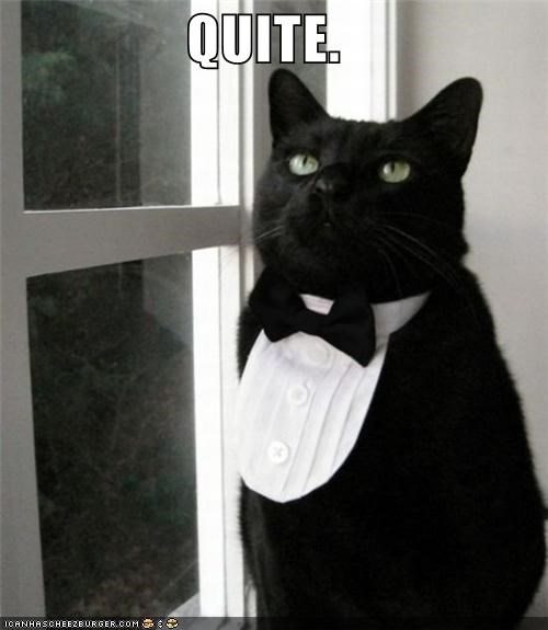 animals,Cats,dressed up,fancy,I Can Has Cheezburger,quite,tuxedo