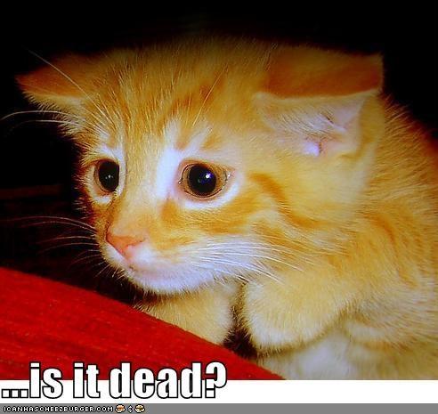 dead kitten lolcats lolkittehs murder orange - 521754880