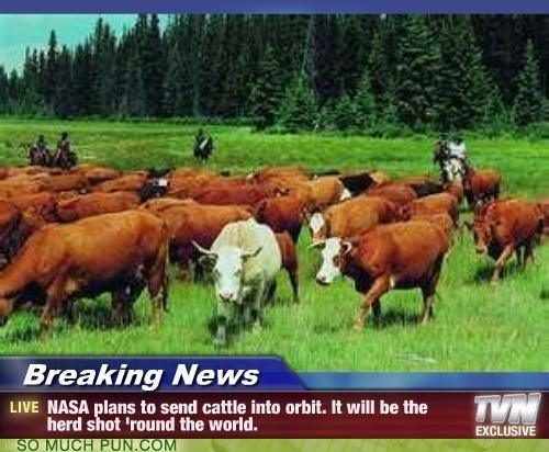 cattle cliché cows herd lolwut nasa phrase plan round send shot space switch twist world