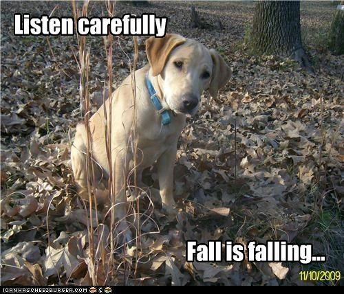 autumn fall golden retriever leaves listen listening - 5217855744