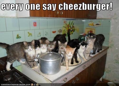 Cheezburger Image 5217948160