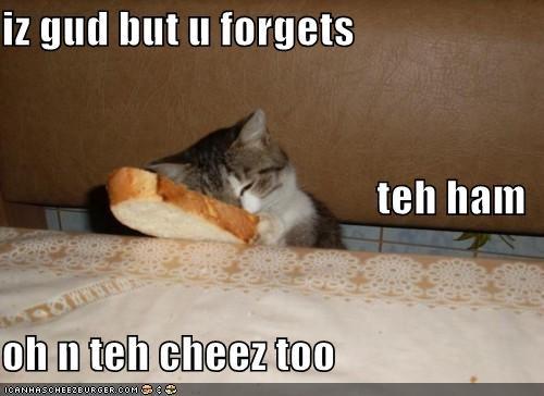 Cheezburger Image 5218189312