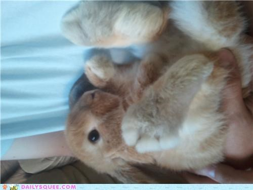 bunny cuddled cuddling feet happy bunday rabbit tickling ticklish - 5218325504