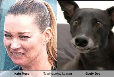 animals dogs goofy Kate Moss model teeth