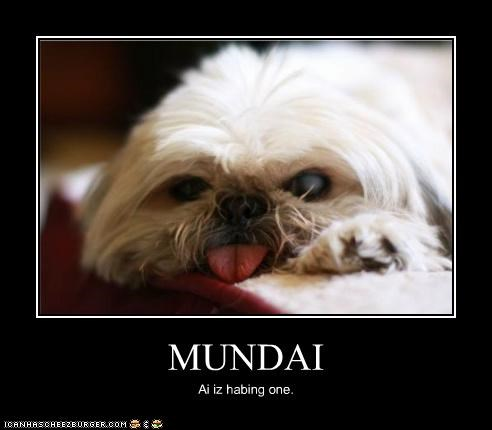 do not want grumpy monday tongue whatbreed - 5218799616