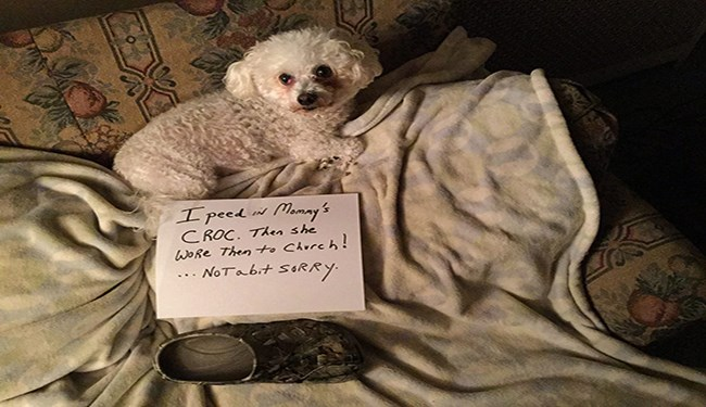 dogs being shamed
