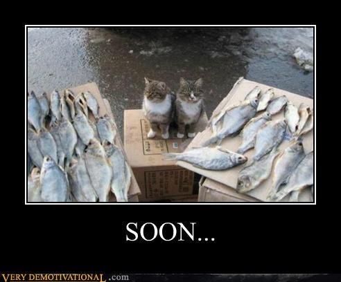 animals Cats fish hilarious - 5218834432