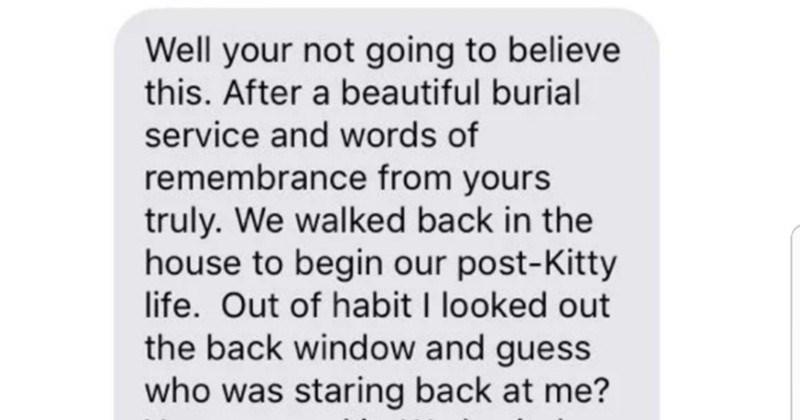 lolcats texts cute Cats funny - 5219077