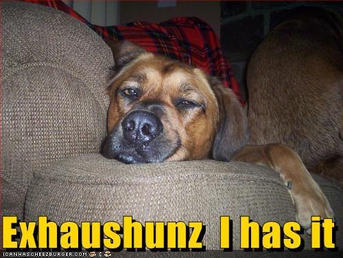 Cheezburger Image 5219177216