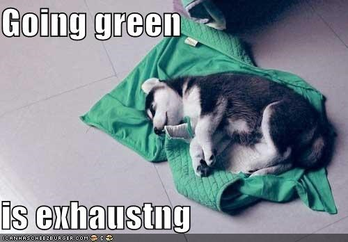 asleep exhausting going green exhausted green husky puppy sleeping - 5219679744