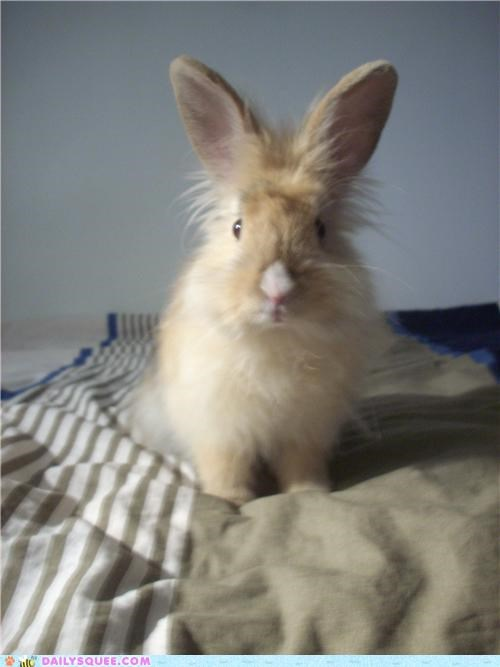 bunny,finnish,frazzled,happy bunday,name,rabbit,reader squees