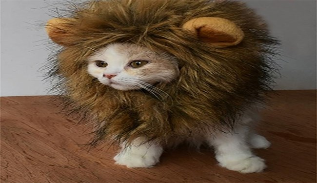 cats wearing lion manes