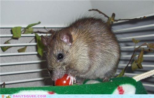 baby Movie rat reader squees Star Trek - 5219967232