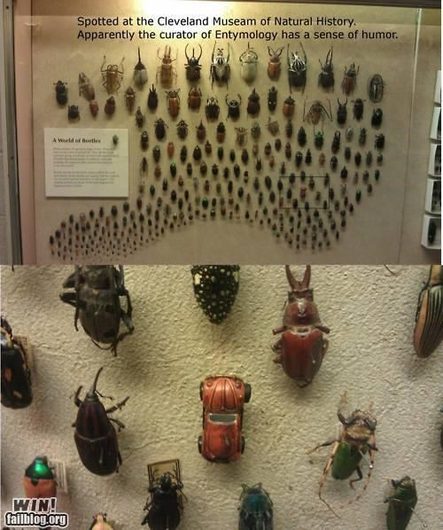 beetle,car,display,exhibit,insects,pun,volkswagon,VW bug