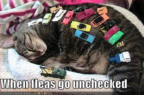cars,fleas,lolcats,matchbooks,micromachines,sleeping,toys